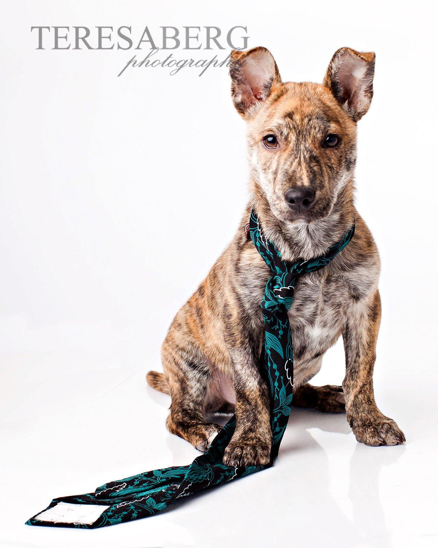 good dog fetch Robin Terrell