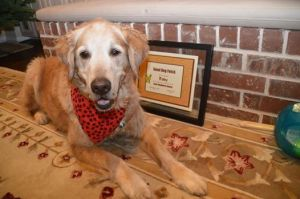 11 year old Toby graduates basic manners class